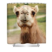 Camel Cameo Shower Curtain
