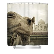 Camel In Front Of The Yamuna River And Shower Curtain