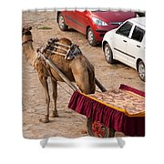 Camel Ready To Take Tourists For A Desert Safari Shower Curtain
