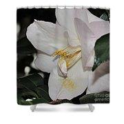 Camellia 18 Shower Curtain