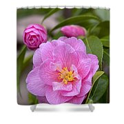 Camellia Camellia X Williamsii Donation Shower Curtain