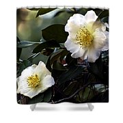 Camellia Nineteen Shower Curtain