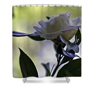 Camellia One Shower Curtain