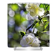 Camellia Thirteen Shower Curtain