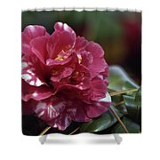 Camellia Twenty-one  Shower Curtain