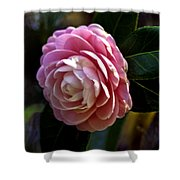 Camellia Twenty-three Shower Curtain