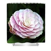 Camellia Twenty-two  Shower Curtain