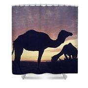 Camels At Dusk Shower Curtain