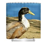 Camp Bell Shower Curtain
