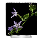 Campanula Shower Curtain