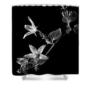 Campanula In Black And White Shower Curtain