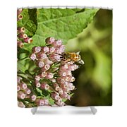 Camphorweed Wildflowers And Honey Bee Shower Curtain