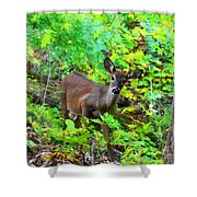 Can I Help You My Deer Shower Curtain