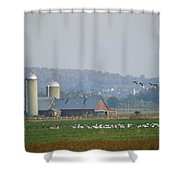 Canada Geese And Other Birds Fill Shower Curtain