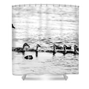 Canada Geese Family II Bw Shower Curtain