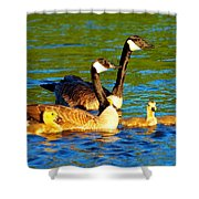 Canada Geese Family Shower Curtain by Paul Ge