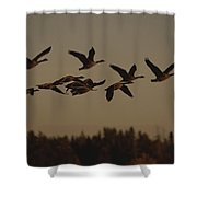 Canada Geese Fly In A Group Shower Curtain