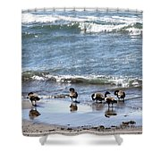 Canada Geese In Lake Erie Shower Curtain