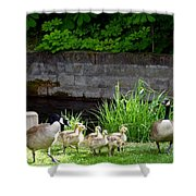 Canada Geese With Goslings Shower Curtain