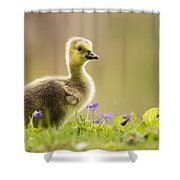 Canada Goose Baby Shower Curtain