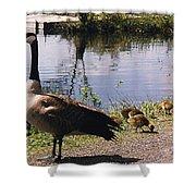 Canadian Geese At Trojan Lake Ny Shower Curtain