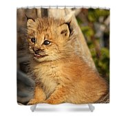 Canadian Lynx Kitten, Alaska Shower Curtain