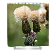 Canadian Thistle Shower Curtain
