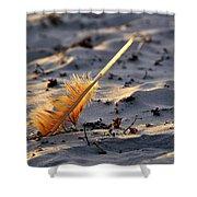 Canaveral National Seashore Shower Curtain