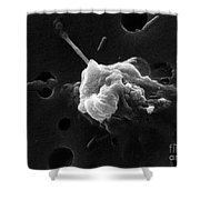 Cancer Cell Death 6 Of 6 Shower Curtain by Science Source