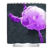 Cancer Cell Death Sequence, Sem Shower Curtain
