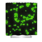 Candida Albicans Shower Curtain