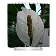 Candle White Shower Curtain