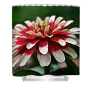 Candy Color Zinnia Shower Curtain