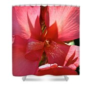 Canna Lily Close Up Shower Curtain