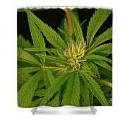 Cannabis Bud Shower Curtain
