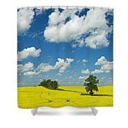 Canola Field And Clouds, Rathwell Shower Curtain