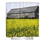 Canola Field And Old Barn Shower Curtain