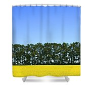 Canola Field And Trees Shower Curtain