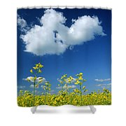 Canola Flowers, Marquette, Manitoba Shower Curtain