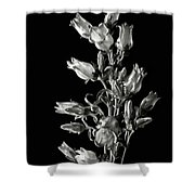 Canterbury Bells In Black And White Shower Curtain