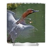 Canvasback In Action Shower Curtain
