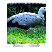 Cape Barren Goose Shower Curtain