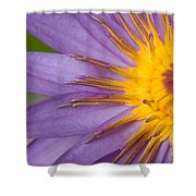 Cape Blue Waterlily Nymphaea Capensis Shower Curtain