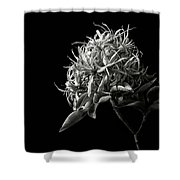 Cape Chestnut In Black And White Shower Curtain