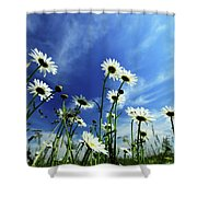 Cape Cod Summer Shower Curtain