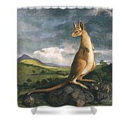 Captain Cook: Kangaroo, 1773 Shower Curtain