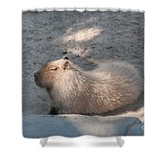 Capybara Shower Curtain
