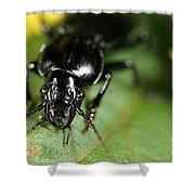 Carabid Beetle Rootworm Rredator Shower Curtain