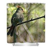 Cardinal 5 Shower Curtain