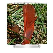 Cardinal Feather Shower Curtain